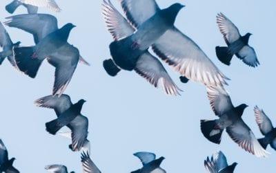 Bird Control – 3 Top Tips